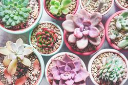 Mix of rare succulent plants in different colors