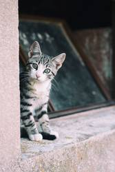 Little curious cat