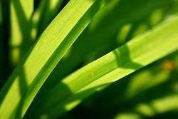 ...so grün
