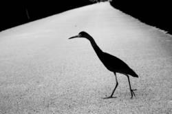 bird x-ing