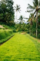 Reis in Bali