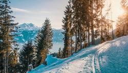 Winterlandschaft mit Blick auf die Alpen im Abendlicht