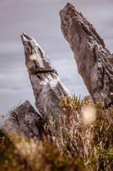 steiniges irland