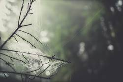 Wald- Magie