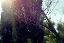 Gartenknipse