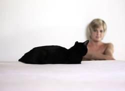 Schwarze Katze von links