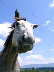 Fliegen : Pferd