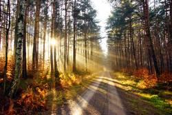 Sonnenstrahlen über dem Weg