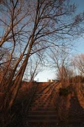Schatten Licht Himmel Treppe Handlauf Baum Ast