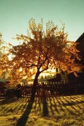 Birnenbaum im Herbst