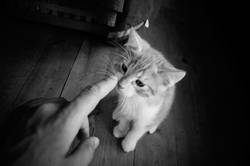 Poke the Cat