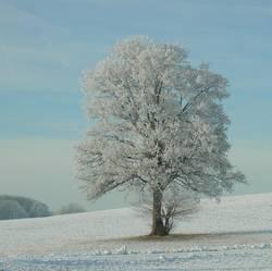 Winter-tr (b) aum
