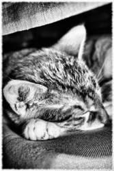 KatzeSchlaf