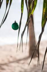 Weihnachtspalme