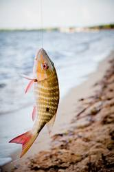Schöner Fang