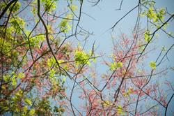 Frühling im Regenwald