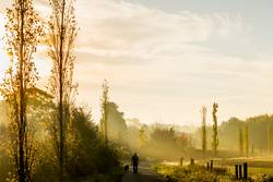 Hundespaziergang mit Nebel und Sonnenaufgang