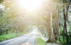 lush road