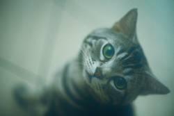 Jungle the CAT