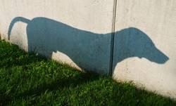 Schatten Hund - 2