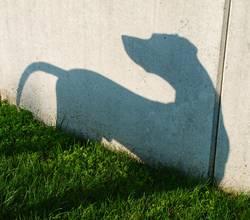 Schatten-Hund - 1