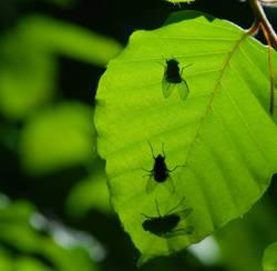 Schatten-Fliegen