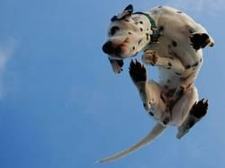 Hund von unten - 4