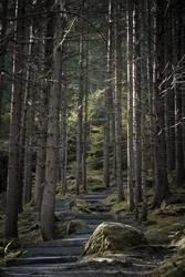Austrian Stairwood
