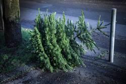 Weihnachtsbaum danach am Straßenrand