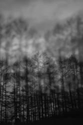 Schatten Wald