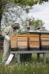 Bienenstand Imkern Wiese