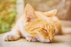 Ghana - Accra - Somewhere Nice - sleeping cat