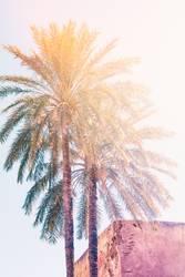 two palms in Marrakech