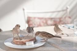 Ungehemmte Vögelei