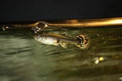 Thomas der kleine Fisch