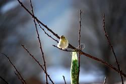 Frühlingsgeflügel