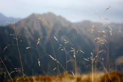 Berg voll Gras