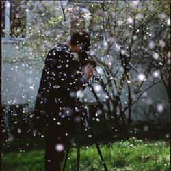 Daniel im Blütenregen