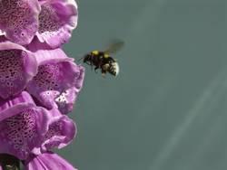 Blütentor zum Honig