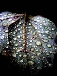 Metallic-Leave in the Rain