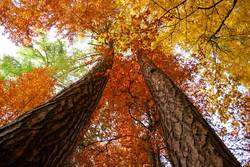 Himmelwärts im Herbst