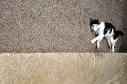 schräge katze