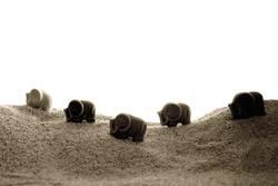 Porzelan-Elephanten auf der Reise