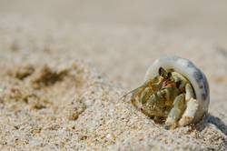 Another Crab