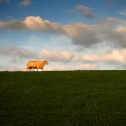 100% lambswool