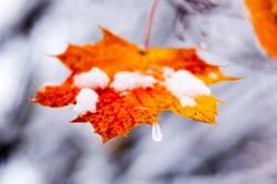 Letzter Herbstgruß / Last autumn greeting