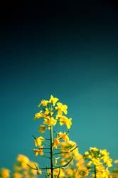 es gelbt so gelb