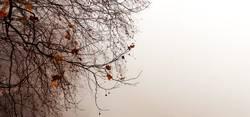 Winterszene mit einem Baum im Nebel