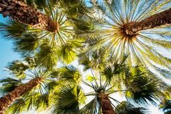 Palmen und blauer Himmel