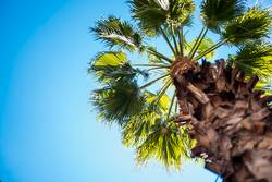 Palme und blauer Himmel